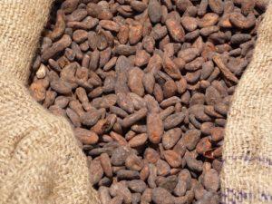 le caratteristiche del cacao